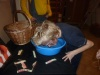 … which after apple bobbing...